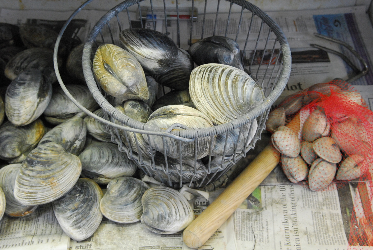 Grilled Cherrystone Clams | Edible Cape Cod