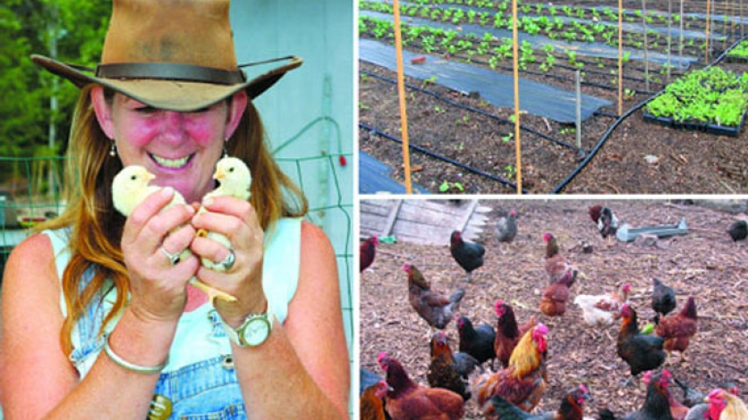 Chicks, chickens, and homegrown plants at Miss Scarlett's Blue Ribbon Farm