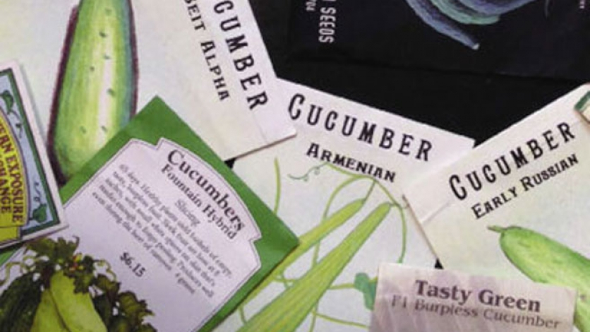 different varieties of cucumber seed packets for growing