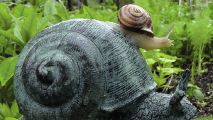 snail in the wilderness