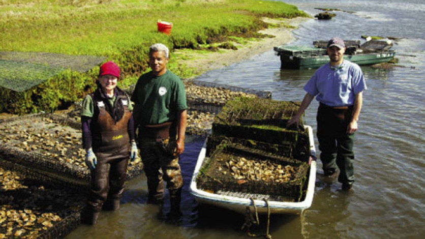 first light oysters respond to nitrogen crisis
