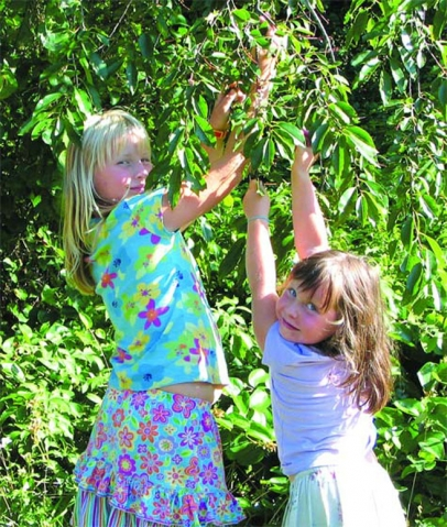 two young girls pick fruit from a leafy tree