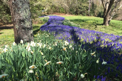 Heritage Museum and Gardens has more than 100 acres of display gardens that feature flowers, trees and shrubs native to Cape Cod.