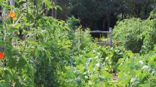 In the Garden Salad Recipe